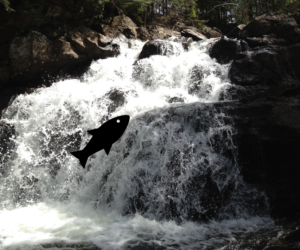 Fish icon shown to be swimming up against a roaring river waterfall