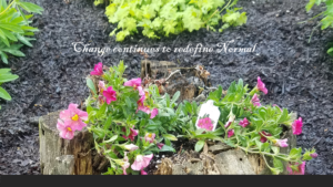 Spring flowers growing on a rotted stump and on ground amidst mulch
