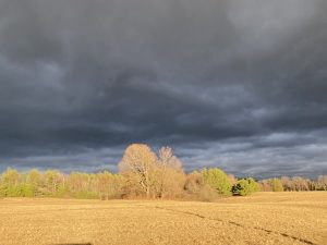 Filde with dark clouds on the horizon